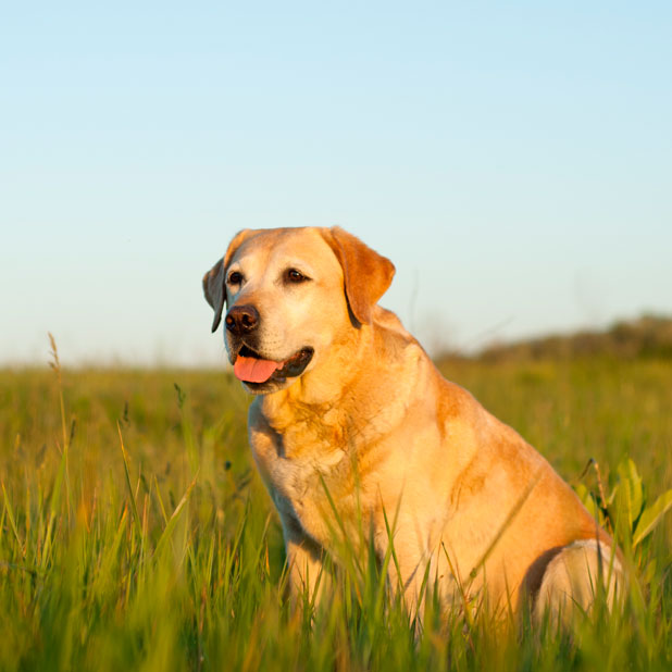 dog in a sunny meadow